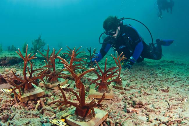 Nova Southeastern Coral Nursery