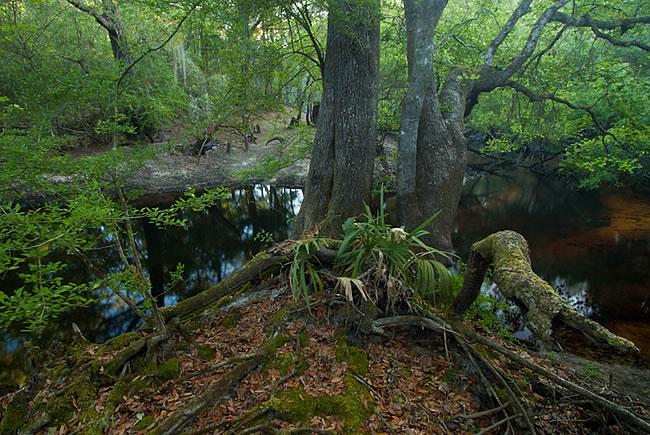 Santa Fe River Preserve, Alachua County