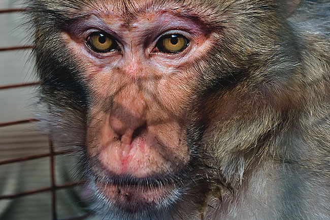 Mystery Monkey