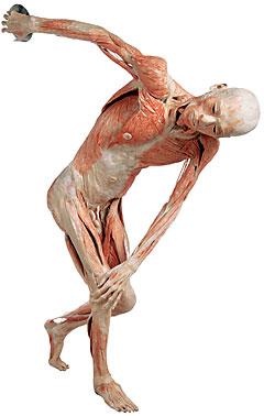 Body w/ discus