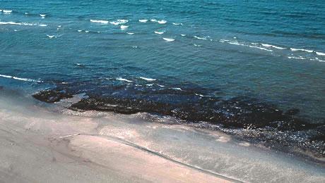 Ixtoc I ravaged shoreline