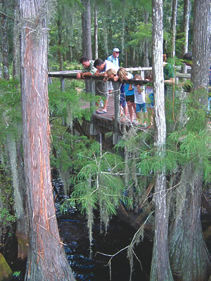 Tallahassee Museum of History & Natural Science elevated boardwalk