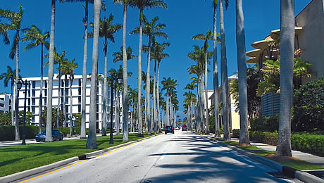 Royal Palm Way