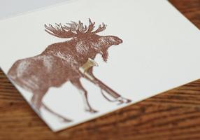 Moose-(8-of-8)