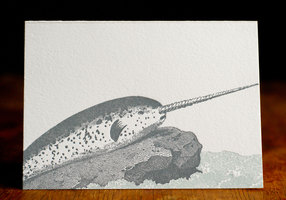 Narwhal-(14-of-37)