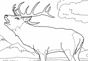 Rocky mountain elk page coloring pages for Elk coloring pages