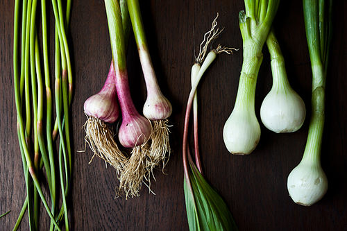 Your Best Spring Alliums