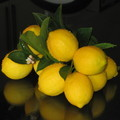 Meyer Lemons