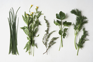 From Scratch: Spring Herb Primer