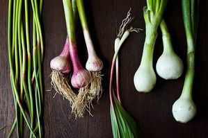 From Scratch: Spring Alliums 101