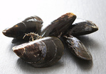 Mussels Vinaigrette Recipe