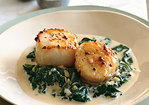 Seared Scallops on Spinach with Apple-Brandy Cream Sauce Recipe