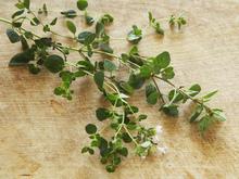 Basic Vegetable Stock Recipe
