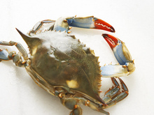 Soft-Shell Crab BLT Sandwiches Recipe