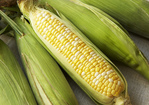 Corn on the Cob with Flavored Butters Recipe