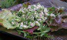 Sugar Snap Salad Recipe
