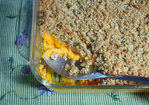Autumn Casserole with Savory Streusel Topping Recipe