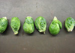 Red-Cooked Brussels Sprouts Recipe