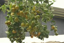 Preserved  citrus in spices Recipe