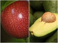 Avocado and Passionfruit Sorbet Recipe