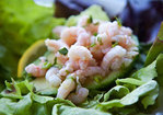 Shrimp and Avocado Salad Recipe