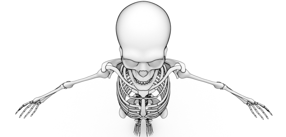 Introduction The Human Body Skeletal System Foundry Community