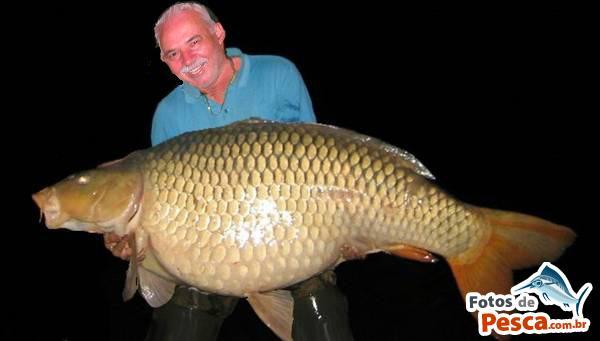 fotos pez carpa gigante