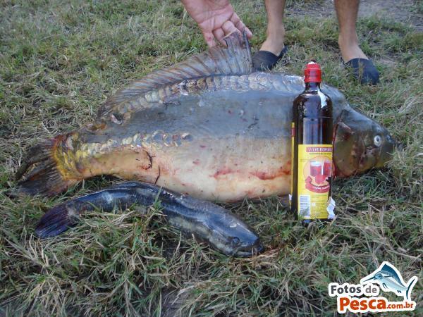 Foto de carpa pego com milho verde outros pesqueiros for Carpa de rio