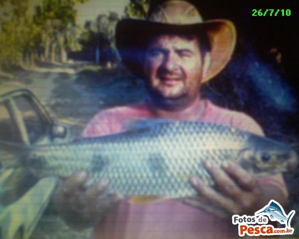 foto Piapara com Milho Verde em Rio Mogi Guaçu - Mais uma bela Piapara pega no rio Mogi guacu...!!!