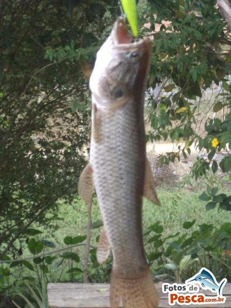 foto Traíra com File de Peixe em  OUTROS LAGOS -