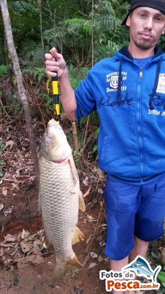 foto Carpa com Massa em Represa Billings - carpa de 10 kilos pescada na represa billings