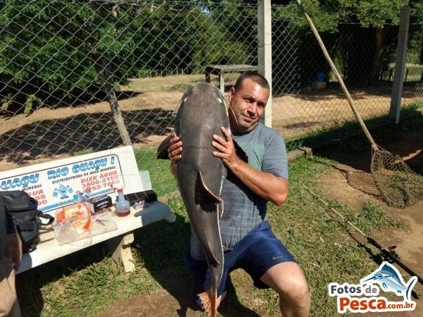 foto Pirarara com Salsicha em  OUTROS PESQUEIROS -