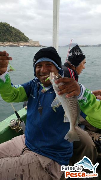 foto Corvina com File de Peixe em Baia de Guanabara - Corvina de linha pego com barco à rola !!!!
