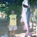 Foto de Piraiba grande gigante recorde
