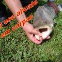 pescaria de carpa cabeçuda www.peixenalinha.com.br