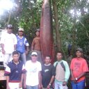 Foto de Pirarucu grande gigante recorde