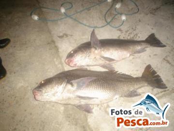 Foto de Miraguaia -