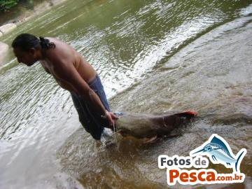 Foto de Cachara -