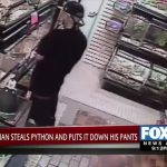 Caught on Camera: Man Attempts to Steal Python, Stuffs Snake down Pants