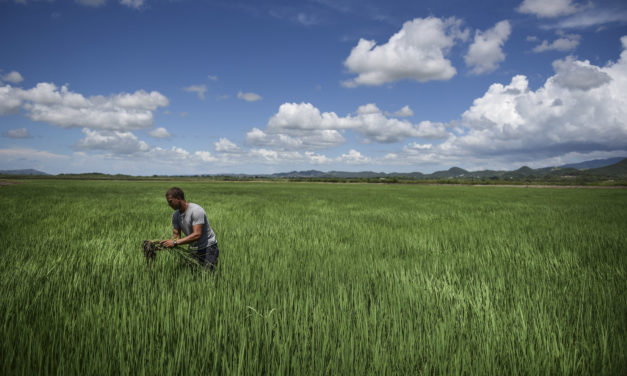 Puerto Rico finds unexpected source of growth in agriculture