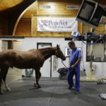 Robotic CT for horses could hold promise for advancing human health