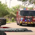 6 City Employees Attacked by Bees
