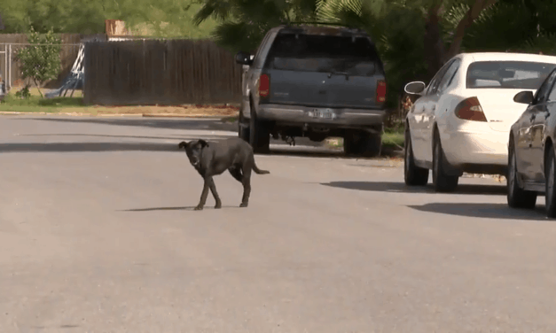 Weslaco Neighbood Seeks Help Over Alleged Dog Invasion