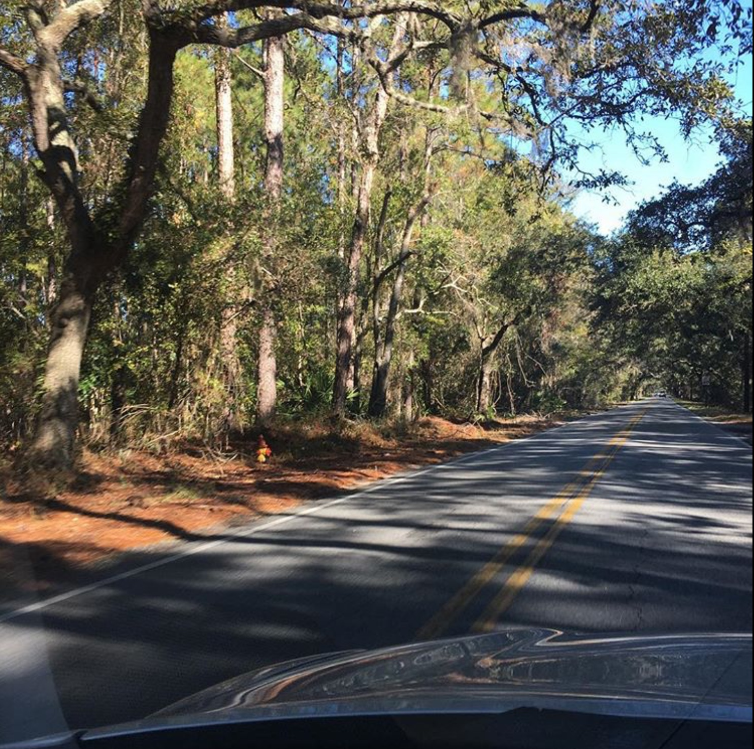Low Country Backroad