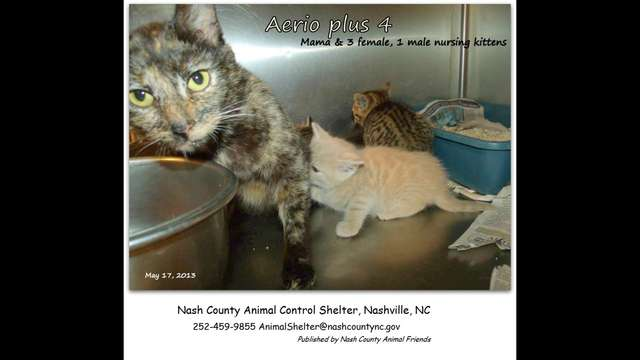 In Animal Control facility!  HELP us Save AERIO +4
