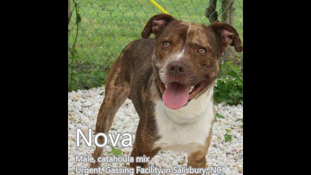 Rowan- NOVA