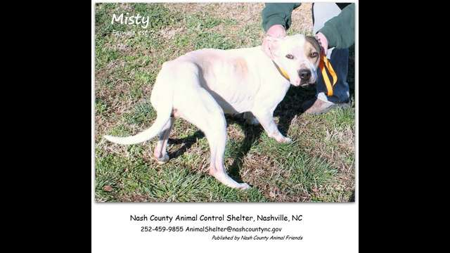 Your Sponsorship Can Help Save MISTY