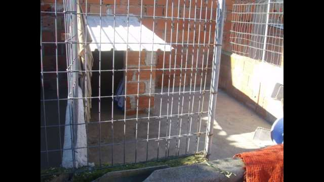 Boxes needed for housing rescued dogs