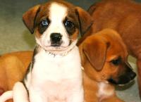Lil' Pups Need Big Pockets - We Need Your Help