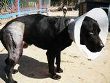NOÉ Állatotthon - Dog rescue